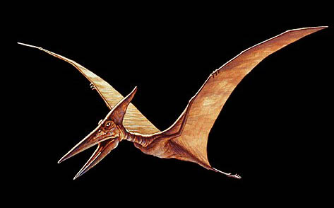 Pterosaur-Facts